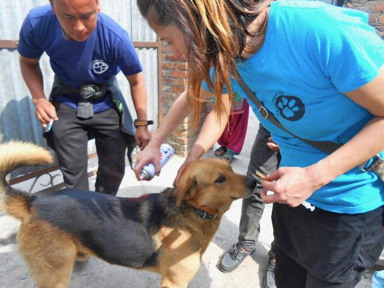 Chance for Nepal - Rabies Appeal Charity