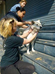 Street Dog Care Nepal
