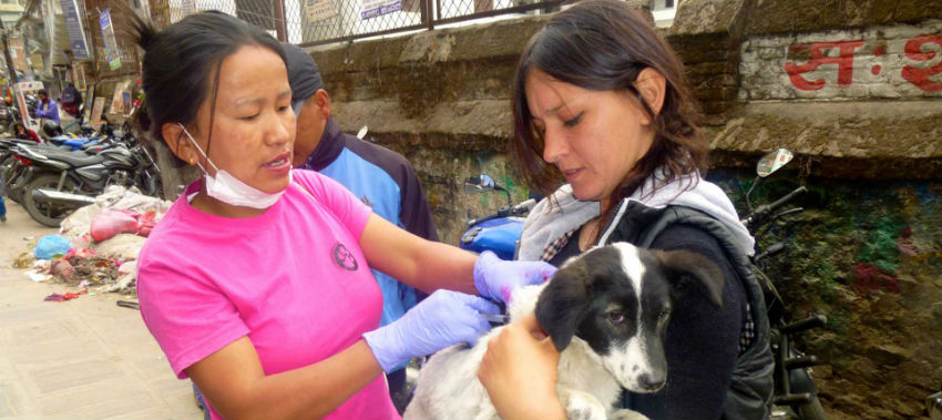 Rabies Control Project