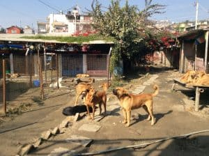 Z-N0.-6-Street-Dog-Care-e1490346921224-300x224