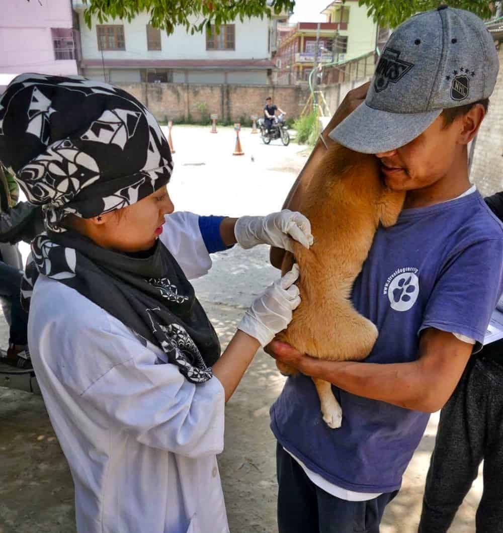 Rabies Vaccination 1 - Chancve for Nepal