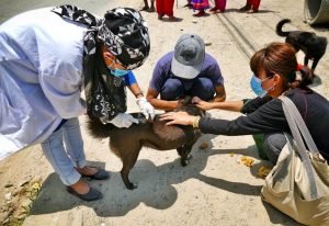 Rabies Vaccination 2 - Chance for Nepal