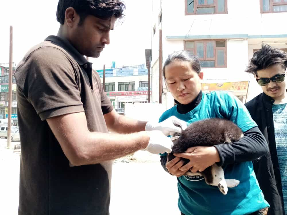 SNEHAs CARE ANTI-RABIES VACCINATIONS APRIL 2019 - Photo 1