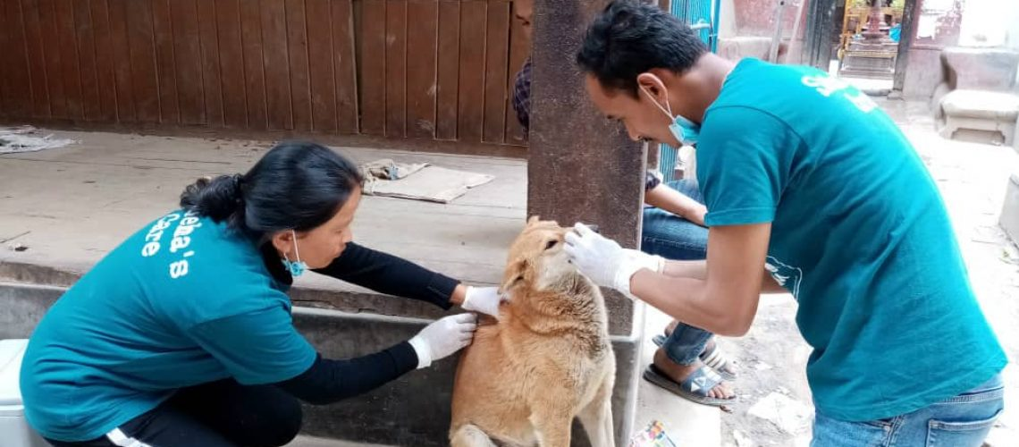 SNEHAs CARE ANTI-RABIES VACCINATIONS APRIL 2019 - Lead Photo
